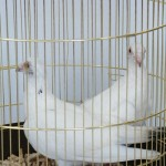 Auksinis-narvelis-1-5