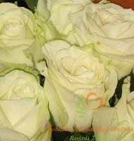 Baltos rožės Klaipėdoje, skintos gėlės, gėlių pristatymas