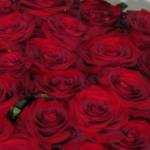 raudonos rožės Klaipėdoje