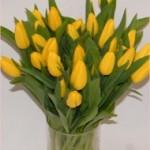 Geltonos tulpės Klaipėdoje