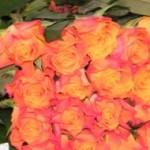Oranžinės rožės Klaipėdoje