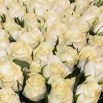 gėliu pristatymas lietuvoje baltos rozes rasotiziedai