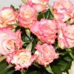 Rožinės rožės Klaipėdoje