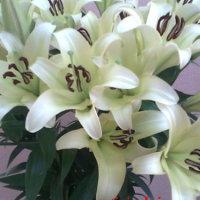 Skintos gėlės lelijos