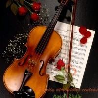 geliu pristatymas skambant smuiko melodijai, klaipedoje geles