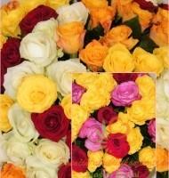 Spalvingų rožių mixas Klaipėdoje