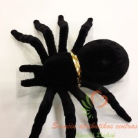 juodas voras tarantulas